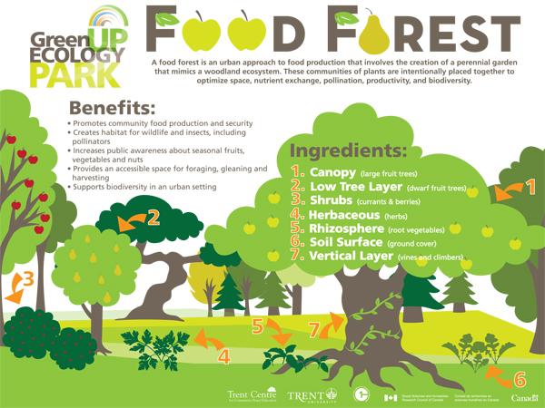 FoodForestPoster_V2