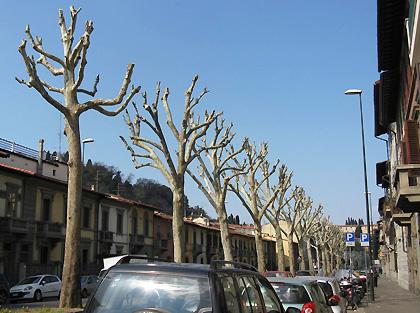 street trees 2.jpg